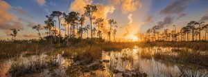 Everglades sunsetjpg