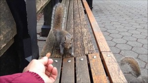 NY Central Park squirrel 6